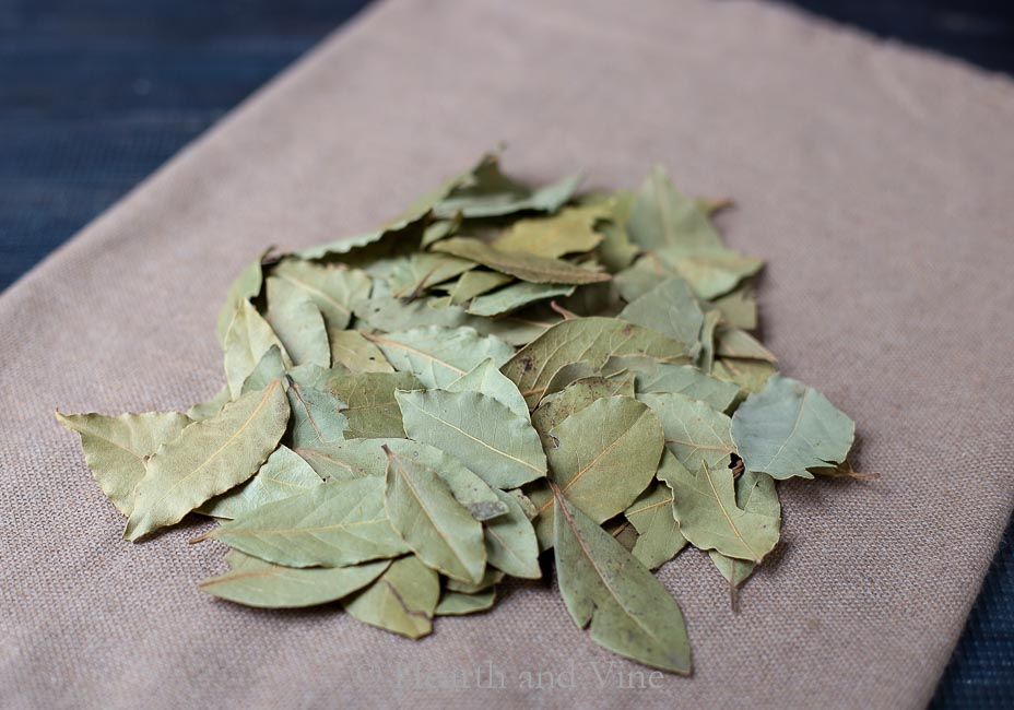 Pile of bay leaves