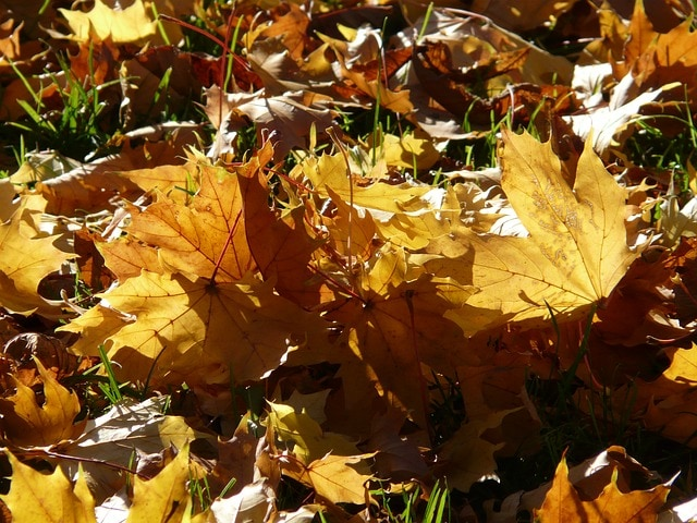 3 Easy Steps for Fall Garden Clean Up