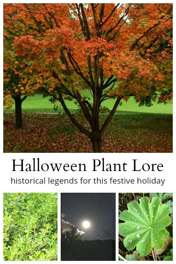 Halloween plant lore collage