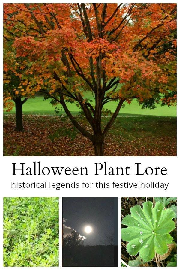 Halloween plant lore collage