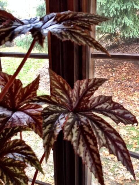 Easy Indoor Garden Plants