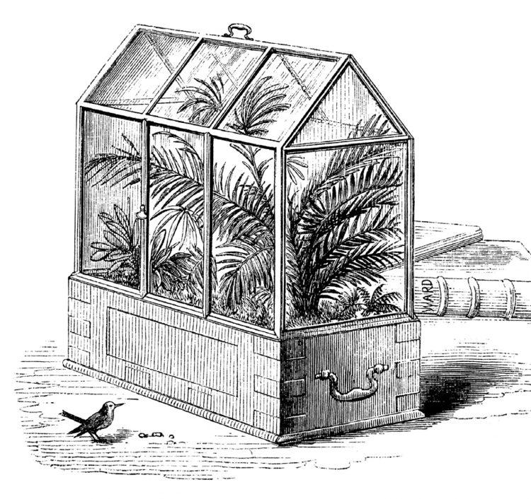 Wardian case old illustration