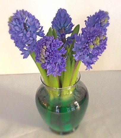 Heavenly Hyacinths – Who needs Candles