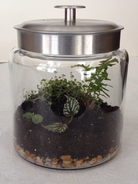Create an Indoor Garden with a Terrarium