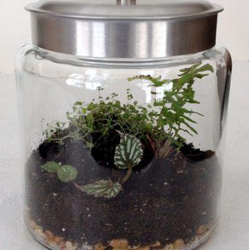 DIY Terrarium indoor garden