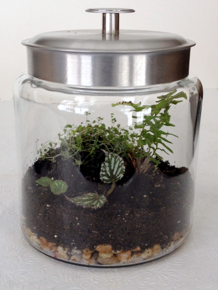 DIY Terrarium indoor garden