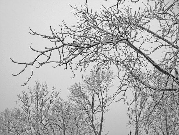 Grow Write Guild #20: Describe Winter in your Garden in 5 to 10 Words