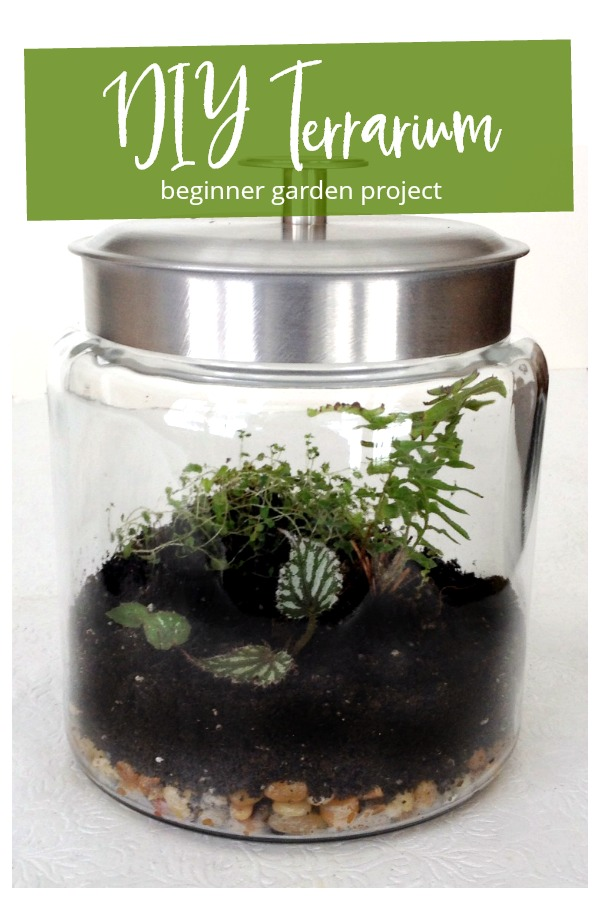 Terrarium beginner garden project