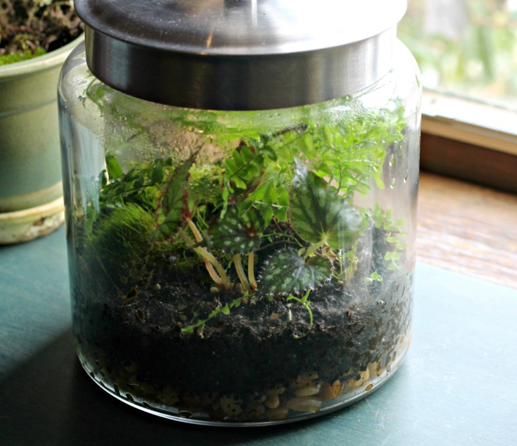 Terrarium on table