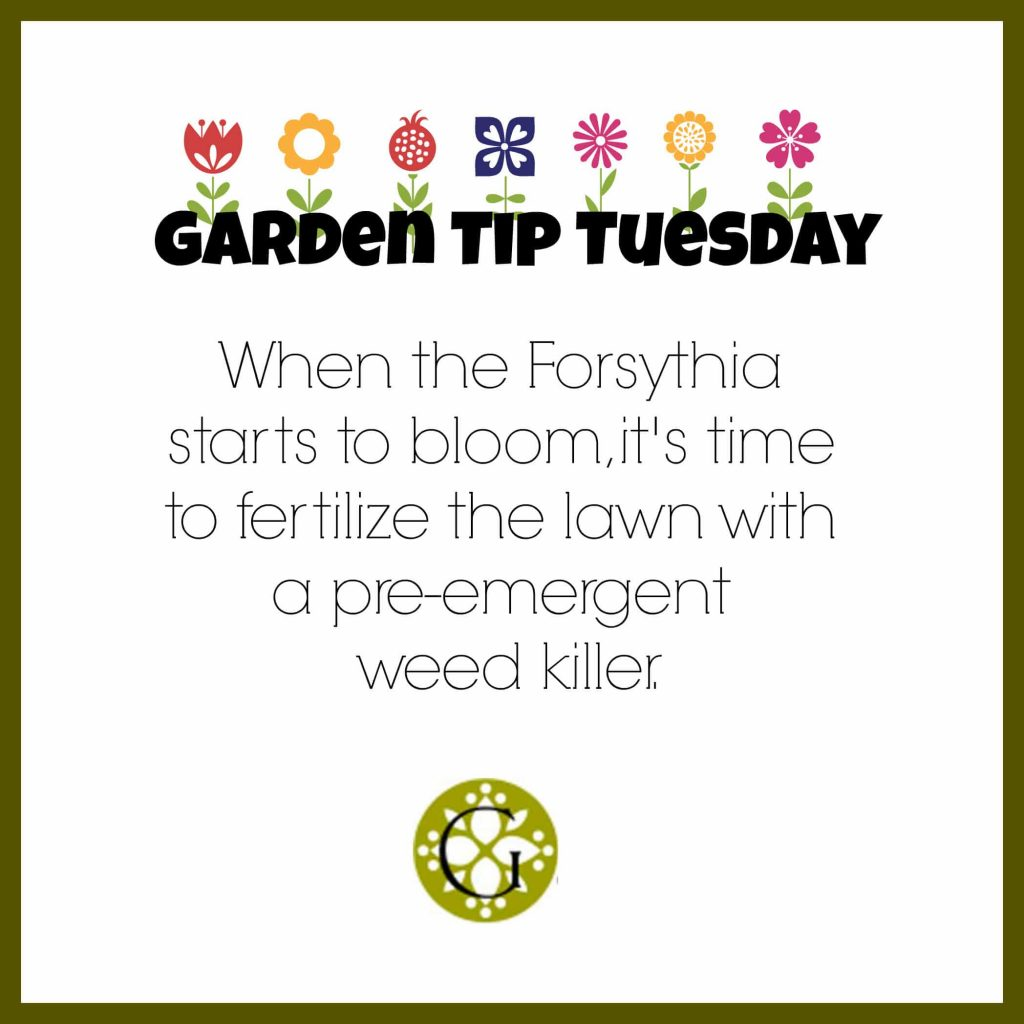 Garden Tip Tuesday #1