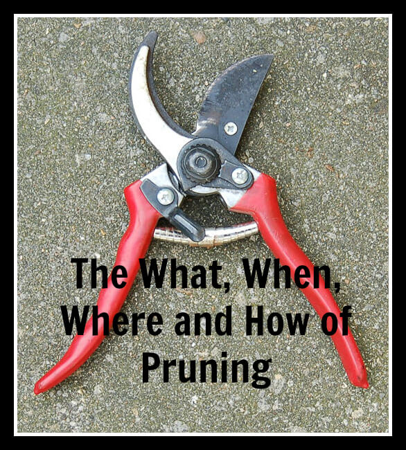Basic Pruning Tips for a Beautiful Full and Lush Garden