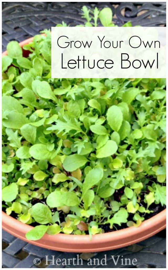 Lettuce in large round container