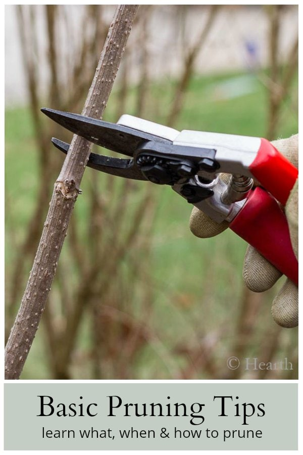 Learn about basic pruning tips for the garden.