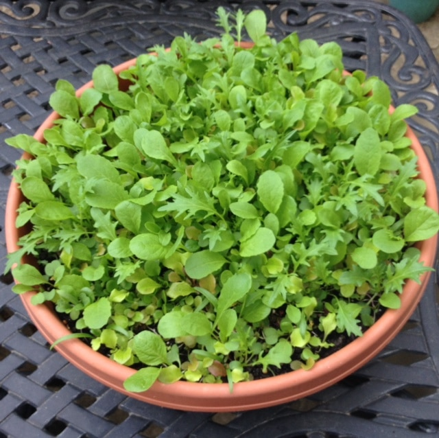 Grow Your Own Salad Bowl