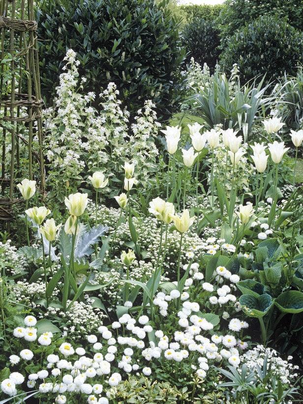 Credit: DK - Garden Design © 2009 Dorling Kindersley Limited
