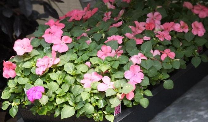 cheap fillers ~ 5 money saving tips ~ gardenmatter.com