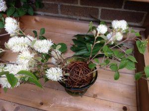 Floral arrangement sphere