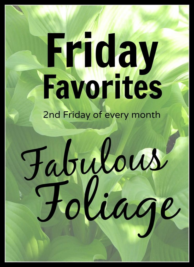 Friday Favorites June