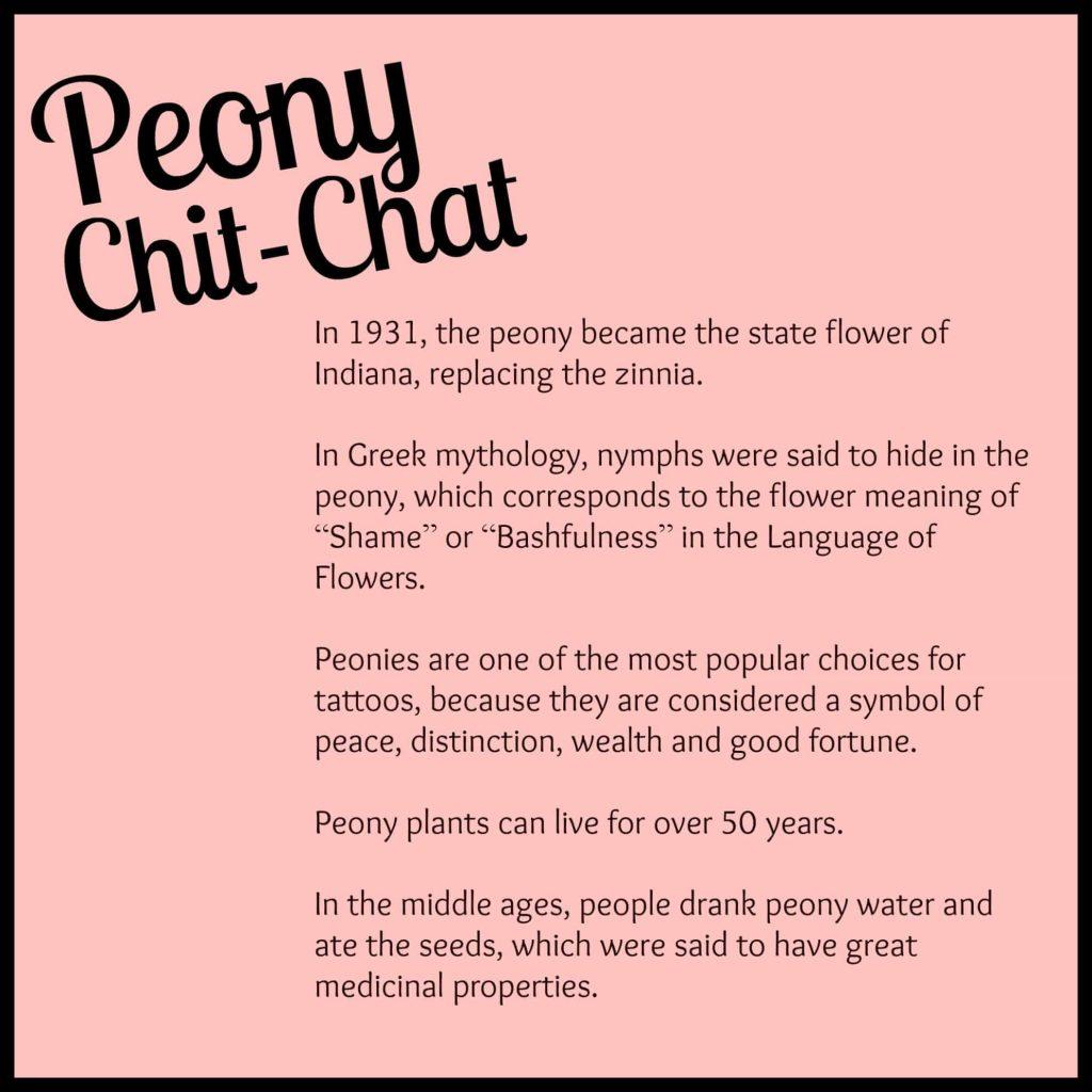Peony Chit-Chat