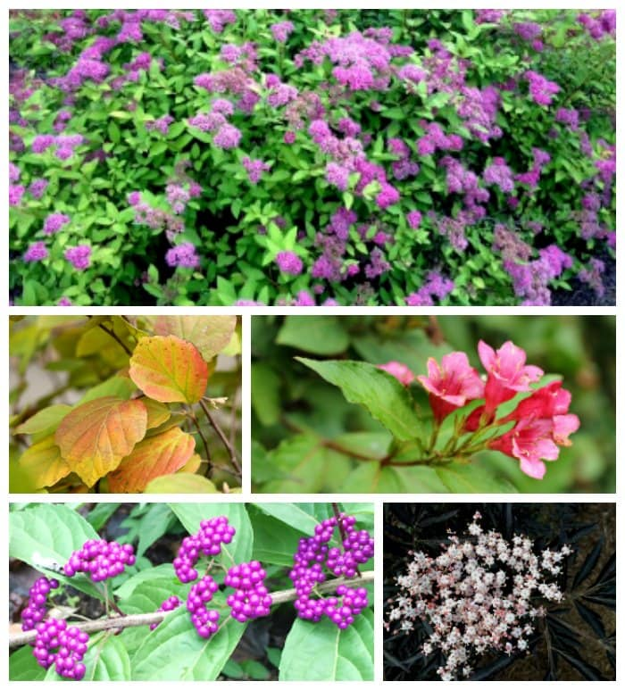 Collage of ornamental shrubs