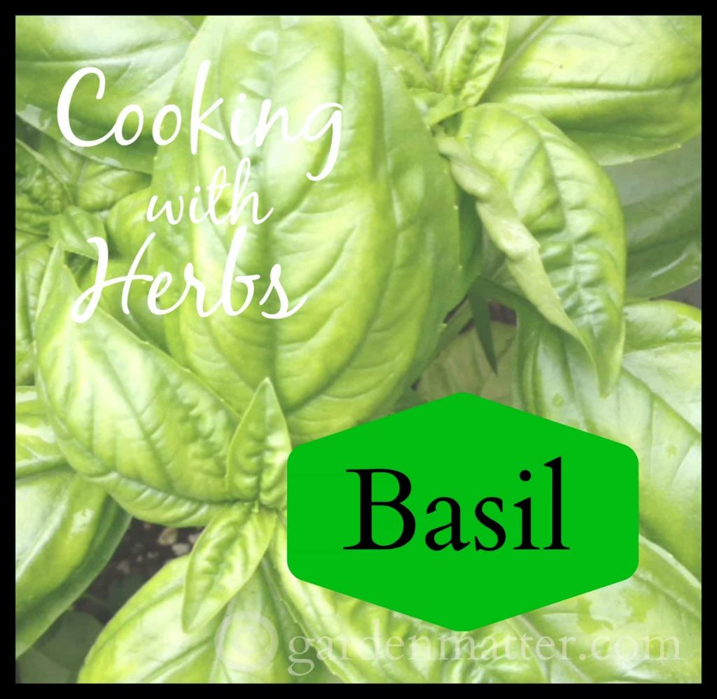 Cooking with Herbs – Growing and Using Basil