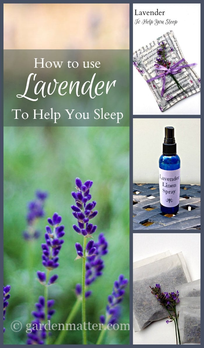 Find out ways to use calming lavender to help you sleep better. Studies show that using lavender essential oil will promote calmness & quiet the mind.