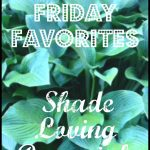 Friday Favorites – Favorite Shade Loving Perennials