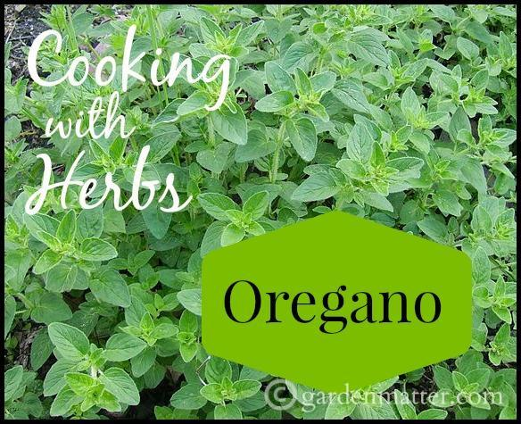 Cooking with Herbs – Oregano