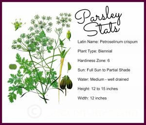 Parsley Stats