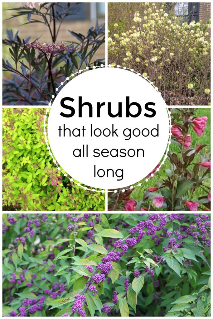 Collage of 5 flowering shrubs