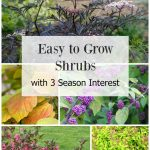 Collage of easy to grow shrubs