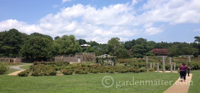 Expansive Rose Garden