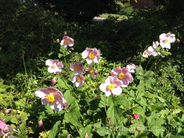 Garden Matter Scoop: September Charm
