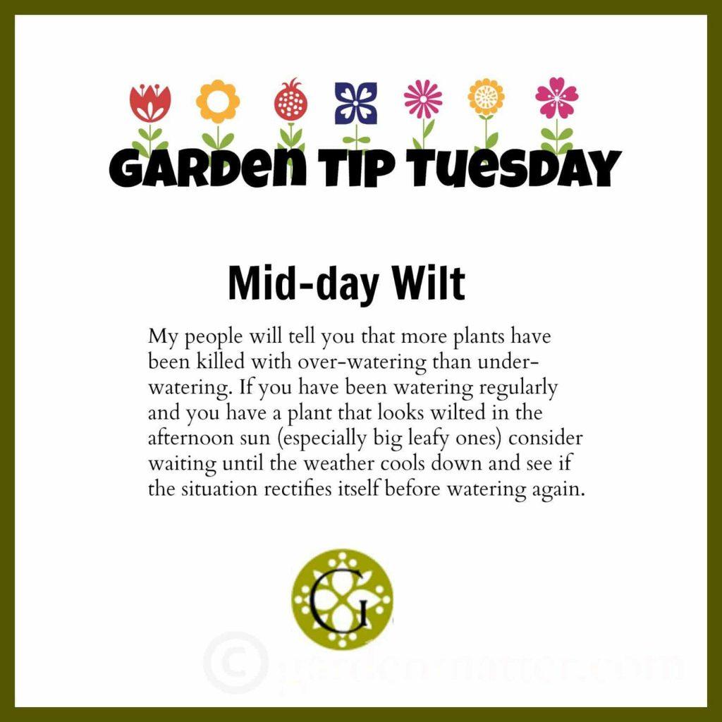 Garden Tip - Mid-Day Wilt