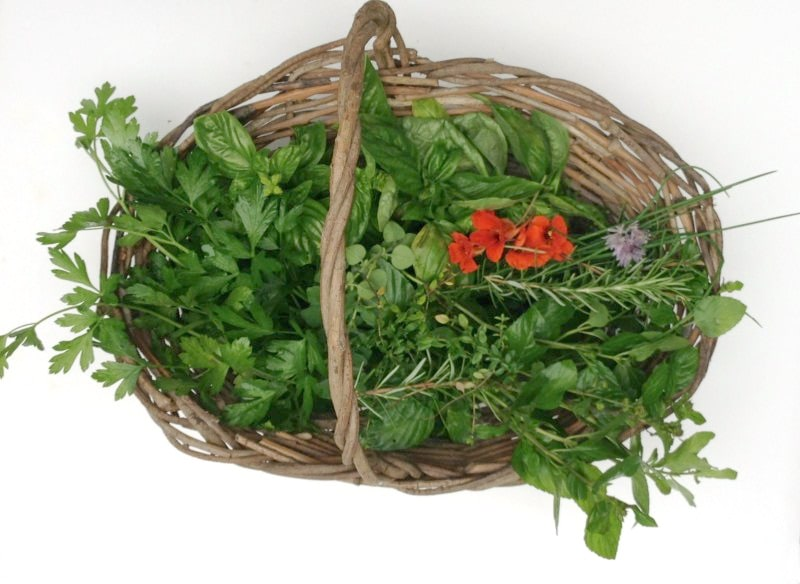 Basket of fresh picked herbs