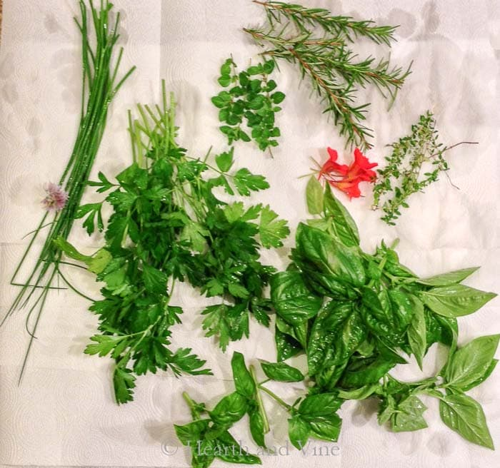 Washed herbs on paper towel