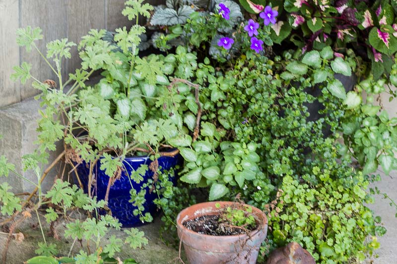 Fall Gardening – 5 Steps to Consider When Bringing Your Plants Inside for the Winter
