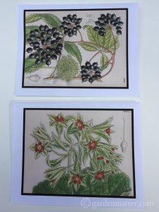 Botanical Print Cards