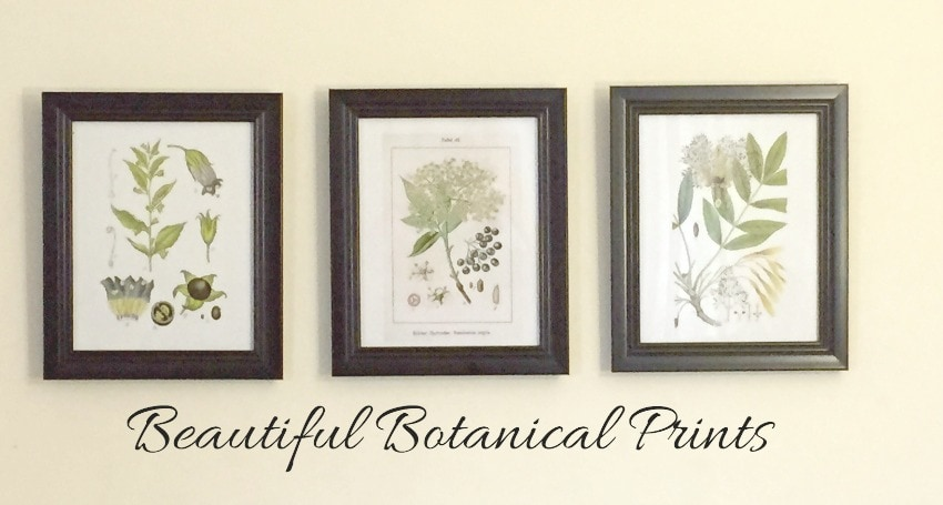 Botanical prints make great gifts and home decor items for Home interiors and gifts framed art