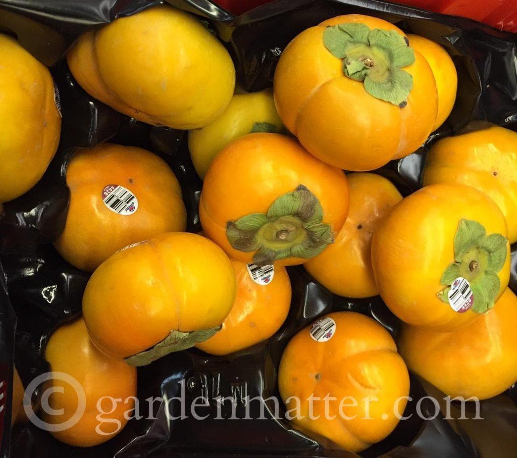 Persimmons - Strip District gardenmatter.com