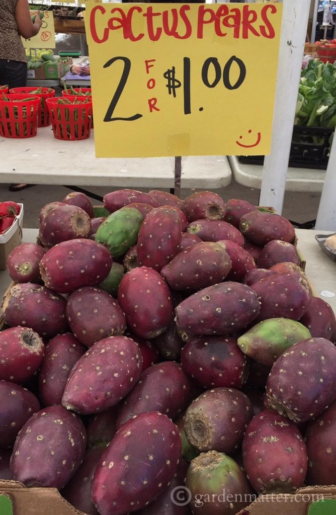 Cactus Pears-Fruit Market - Strip District - gardenmatter.com