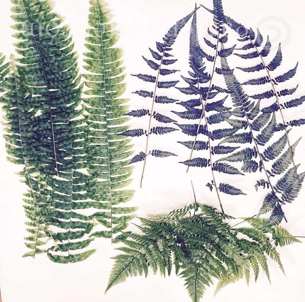 Fern printed tea towels make great gifts at the holidays and you can use this technique with just about any pretty foliage.