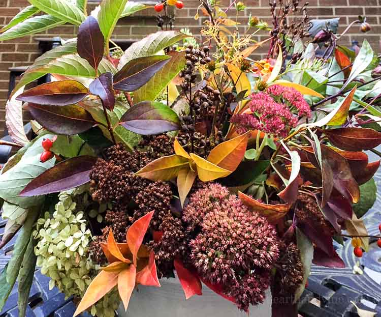 A fall centerpiece easily be made from plants and flowers in your own backyard. Learn how to create something stunning and free for your holiday table.