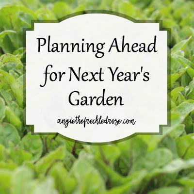 Planning ahead for next years garden