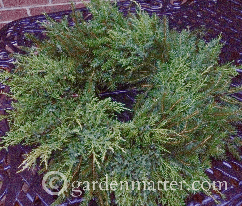 DIY Fresh Evergreen Wreath