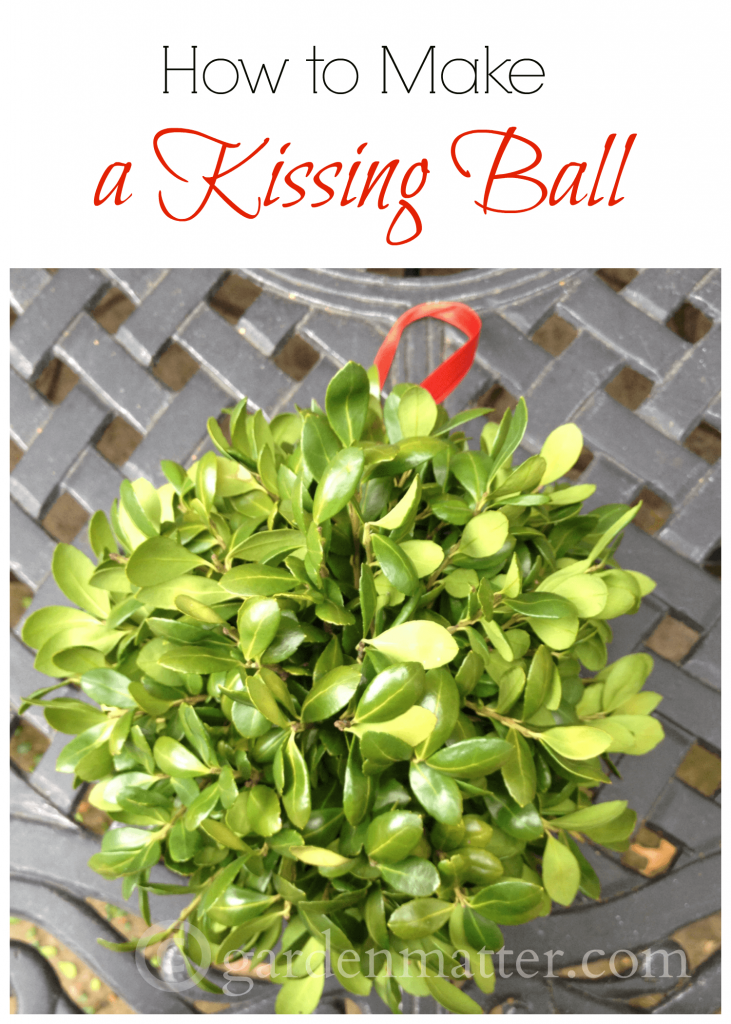 Learn how to make a boxwood kissing ball in three easy steps. They are fun to hang in your entry and look nice all season long.