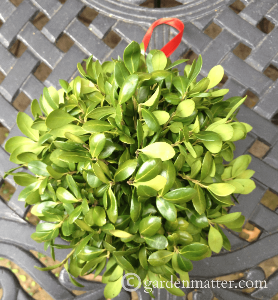 How to Make a Boxwood Kissing Ball
