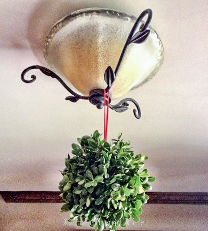 Boxwood kissing ball hanging in foyer