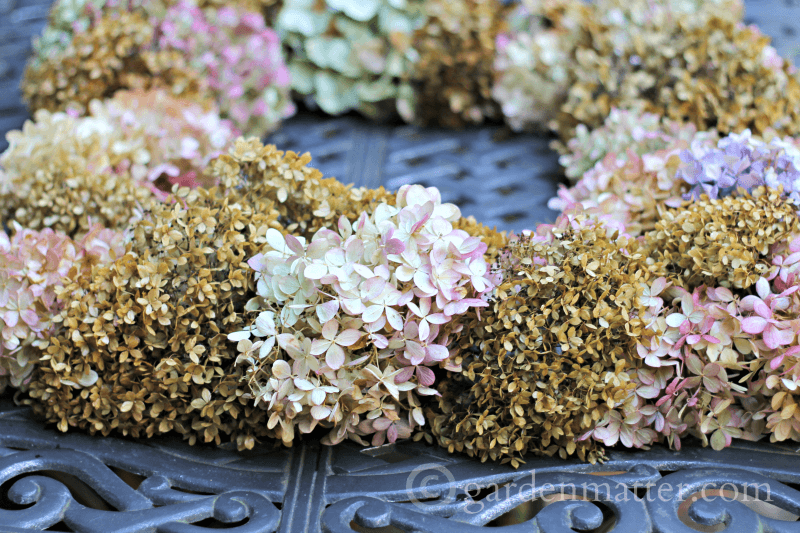 Dried Hydrangea on table view