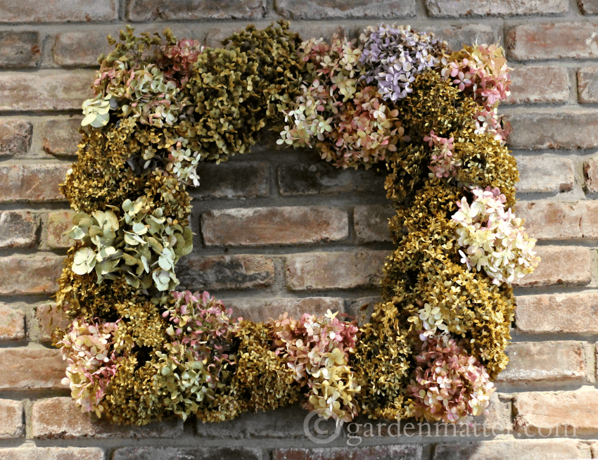 "As I was taking down my Christmas decorations I started pitching all my green materials in the back ""compost"" area, which is really just a place where I dump all my clippings, old dirt etc. I couldn't decide what to do with all the hydrangea I used, and I just didn't want to store them so I decided to make a wreath to hang above our mantel."